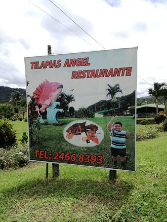 Image result for Tilapia Angel alajuela