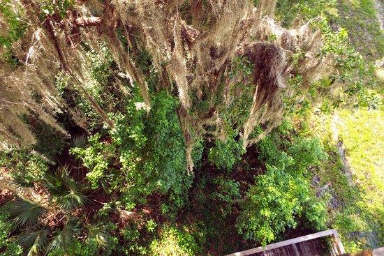 Micanopy, FL: Paynes Prairie Preserve State Park