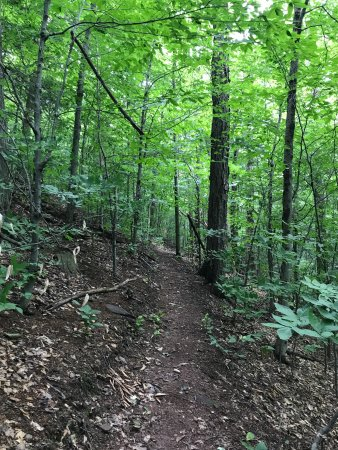 Liberty, NY: Great hike along the #1 trail.