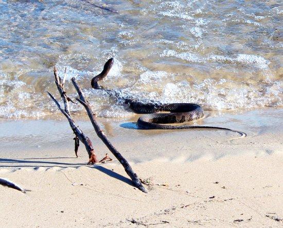 Rock Island State Park: Island snake