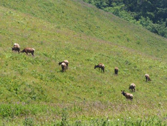 Otis, OR: Elk