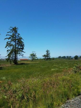 Bay City, OR: farmland along the tracks