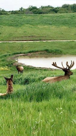 Lee G. Simmons Conservation Park and Wildlife Safari : photo0.jpg