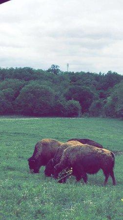 Lee G. Simmons Conservation Park and Wildlife Safari : photo1.jpg