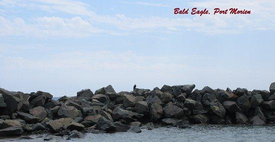 Port Morien照片