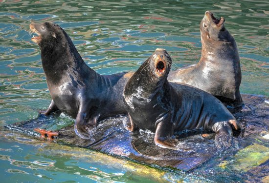 Newport's Historic Bayfront: Sea Lions are entertaining.