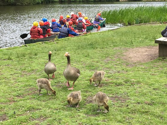 Cinderford, UK: Wildlife and boaters