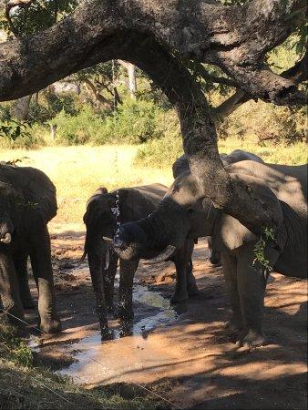 Manyeleti Game Reserve, Sudáfrica: photo0.jpg