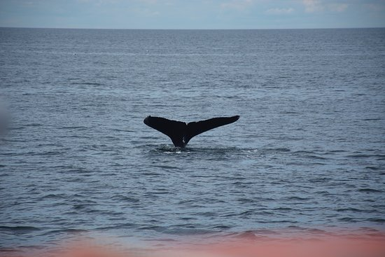 Granite State Whale Watch: 1 of 3 humpbacks viewed on this day