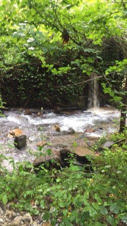 Wildwater Nantahala Falling Waters Resort & Canopy Tours: photo0.jpg