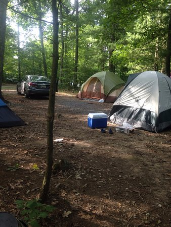 Heavenly Acres Campground: Had 3 tents on this site we had D1 to D4