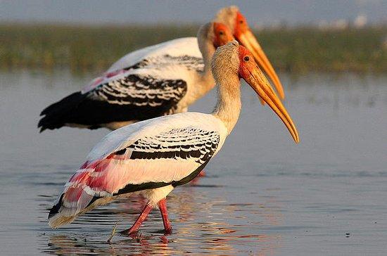 Chreav Vogelschutzgebiet Tour von...