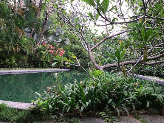 Tiger Rock: Pool