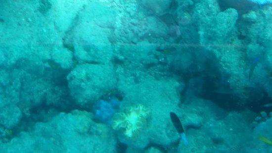 Green Island Cruise - Day Tour (Big Cat Green Island Reef Cruise): 20170709_105102_large.jpg