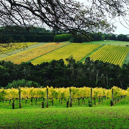 Mornington Peninsula, Australia: Vineyards looking at their best