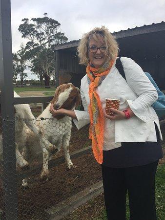 Moorooduc, Australia: The Big Goose
