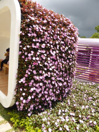 Dalat Flower Park : 花とベンチ