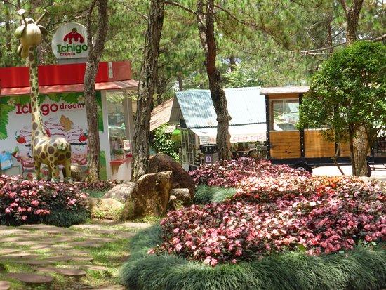 Dalat Flower Park : 売店?