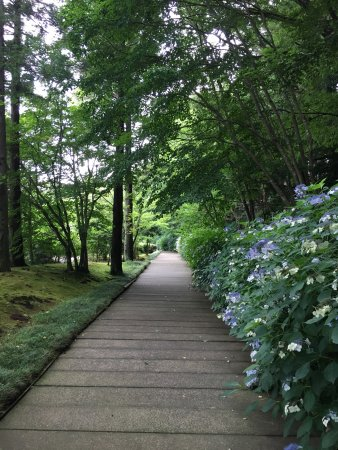 Kawamura Memorial DIC Museum of Art: 7月に入り、山百合が咲き始めました。紫陽花、蓮の花はそろそろ盛りを過ぎます。