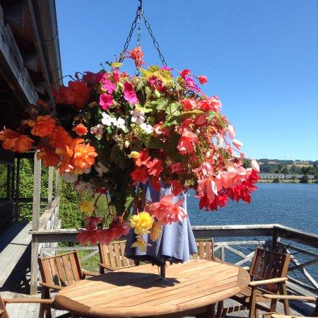Mourea, Nouvelle-Zélande : Summer colour on the deck