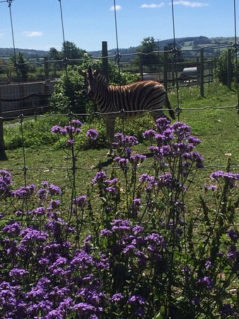 Axminster, UK: Axe Valley Wildlife Park