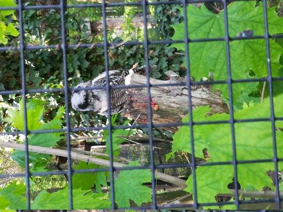 Mapa Zoo Picture Of Zoo Opole Tripadvisor
