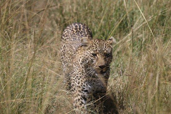 Zdjęcie Rekero Camp, Asilia Africa
