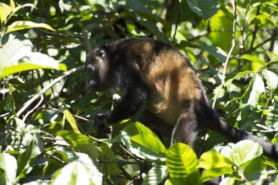 Sierpe, Costa Rica: Kokopelli Boots Tour