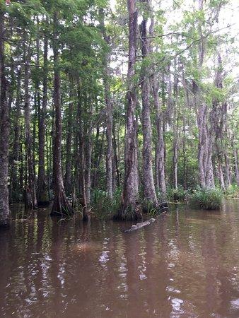 Slidell, Louisiane : photo3.jpg
