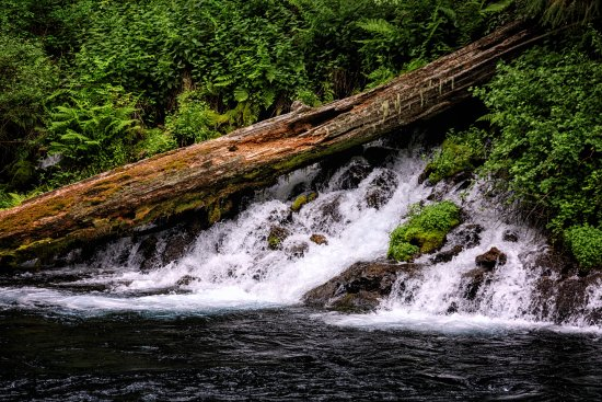 Camp Sherman, OR: Springs flowing into the Metolius River
