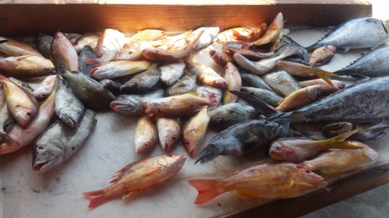 H2O Watersportz: Assortment of fish caught on the RCC