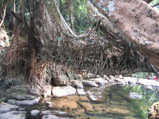 Mawlynnong Waterfall: A view of Root Bridge over Maylynnong Waterfall