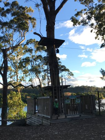 Nowra, Australia: Trees Adventure