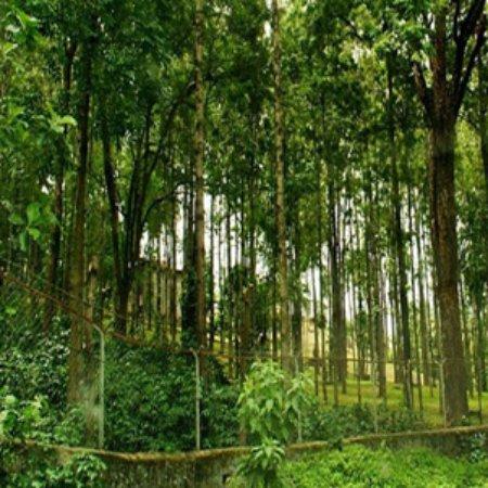 Marayoor Sandalwood Forest- View from Roadside - Picture of Marayoor