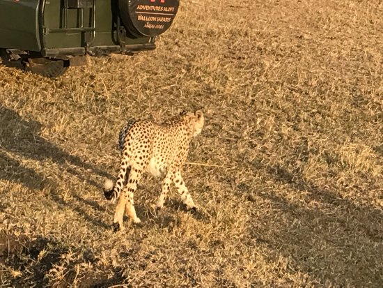 Mara Crossings Camp: photo6.jpg