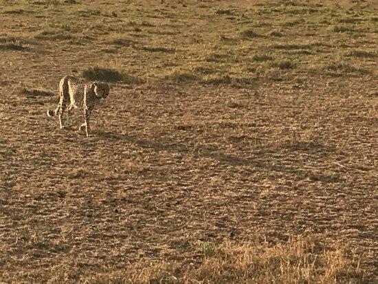 Mara Crossings Camp: photo7.jpg