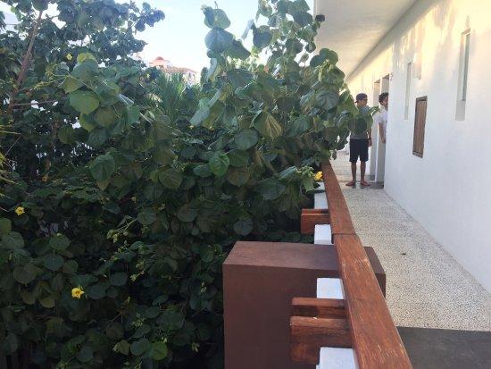 Hotel Barra de Navidad: photo1.jpg