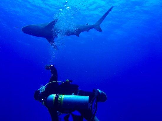 Остров Турнеффе, Белиз: photo3.jpg