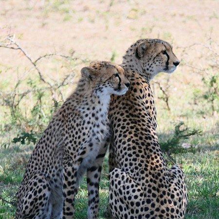 Porini Mara Camp Foto
