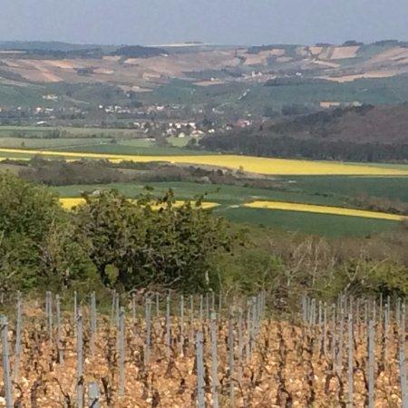 Coulanges-la-Vineuse, France : Les vignes de nos amis d'Irancy !