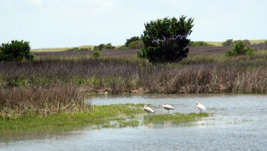 Beaufort, NC: Wild horses not the only undisturbed natural inhabitants