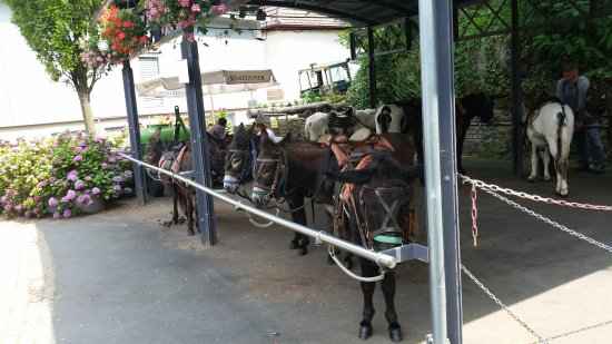 Drachenfelsbahn: Eselstation