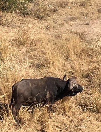 Parque Nacional Kruger, Sudáfrica: photo5.jpg