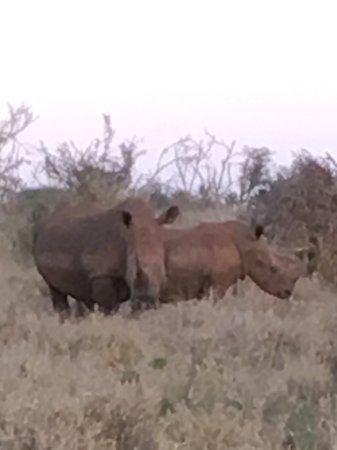 Kruger Nationalpark, Sydafrika: photo6.jpg