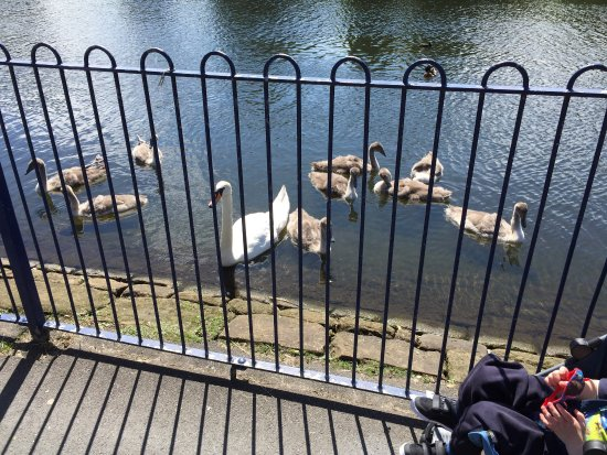 Round Sefton Park lake