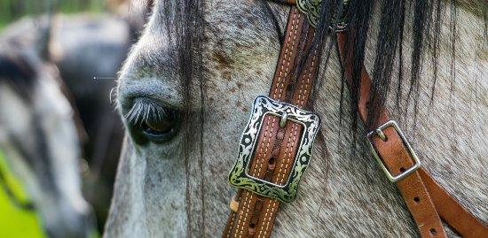 Midway, UT: Horseback Riding