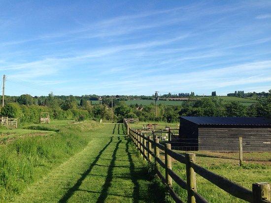 Little Fant Farm