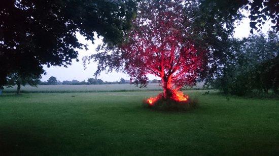 Oldenburg in Holstein, Allemagne : Kl. 8 på kvällen tänds en belysning under trädet. vackert, som om det brann.