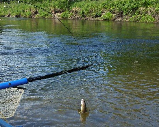 Alaska fishing and raft adventures day tours bild fr n for Fishing in fairbanks alaska