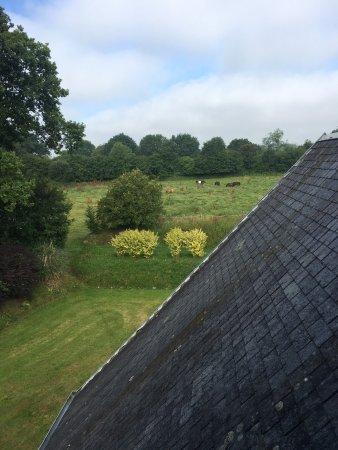 Manoir de la Foulerie: La vue de la chambre duchesse